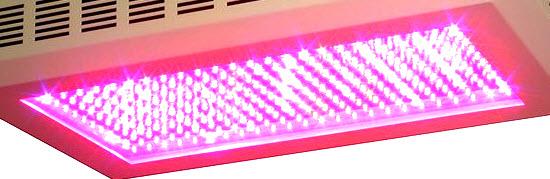 LED Pflanzenlicht