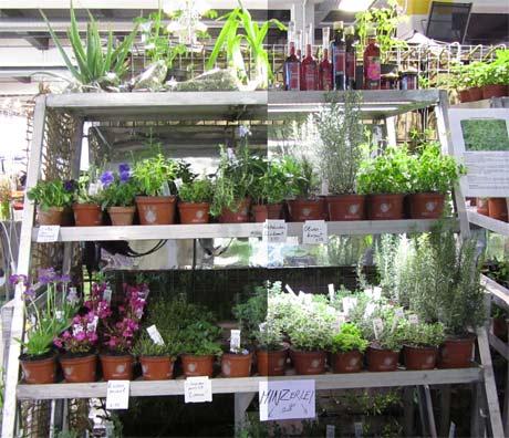 LED Beleuchtung Pflanzen